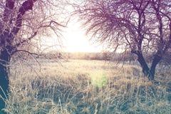 Красивый ландшафт зимы с винтажный тонизировать стоковые фотографии rf