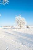 Красивый ландшафт зимы с снегом покрыл деревья - солнечный зимний день Стоковое фото RF