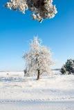 Красивый ландшафт зимы с снегом покрыл деревья - солнечный зимний день Стоковые Фотографии RF