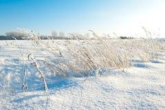 Красивый ландшафт зимы с снегом покрыл деревья - солнечный зимний день Стоковые Изображения