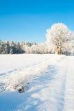Красивый ландшафт зимы с снегом покрыл деревья - солнечный зимний день Стоковое Фото