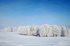 Красивый ландшафт зимы с снежными древесинами Стоковая Фотография