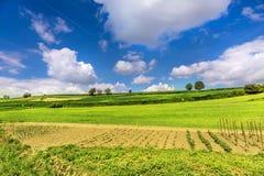 Красивый ландшафт и облачное небо весны Стоковое Изображение RF