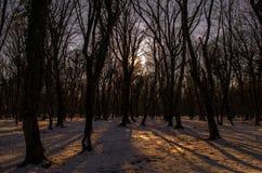 Красивый ландшафт на заходе солнца в древесине между деревьями напрягает в зимнем периоде, солнечном пути в лесе Azerba зимы снеж Стоковое фото RF