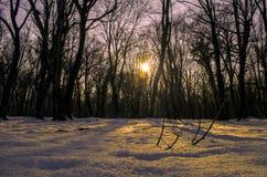 Красивый ландшафт на заходе солнца в древесине между деревьями напрягает в зимнем периоде, солнечном пути в лесе Azerba зимы снеж Стоковые Изображения