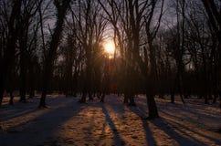 Красивый ландшафт на заходе солнца в древесине между деревьями напрягает в зимнем периоде, солнечном пути в лесе Azerba зимы снеж Стоковые Фотографии RF