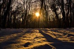 Красивый ландшафт на заходе солнца в древесине между деревьями напрягает в зимнем периоде, солнечном пути в лесе Azerba зимы снеж Стоковые Фото