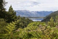 Красивый ландшафт на парке Pumalin. Стоковое фото RF