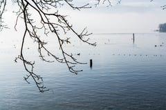 Красивый ландшафт озера в зиме Стоковые Изображения
