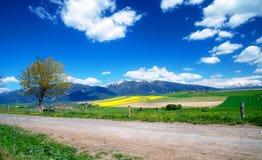 Красивый ландшафт, дорога и зеленый и желтый луг с полем и горой и деревней снега Стоковые Изображения