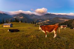 Красивый ландшафт осени в горах Karpaty в лесе Стоковое фото RF