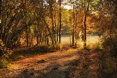 Красивый ландшафт осени с деревьями Стоковые Фото