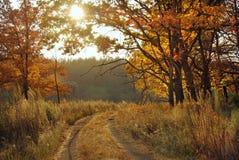 Красивый ландшафт осени с деревьями Стоковая Фотография RF