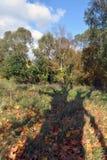 Красивый ландшафт осени с тенью дерева Стоковые Фото