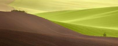 Красивый ландшафт полей зеленого цвета сельской местности на времени восхода солнца Стоковые Фотографии RF