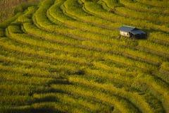 Красивый ландшафт поля риса Cham Mae террасного на горе mai chiang Таиланд Стоковое Изображение RF