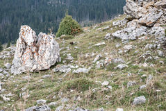 Красивый ландшафт прикарпатский взгляд сверху гор Стоковые Фото