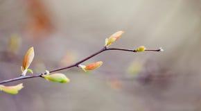 Красивый ландшафт природы весны, хворостина дерева с красочным красным зеленым цветом выходит фокус взгляда макроса селективный Стоковые Фото