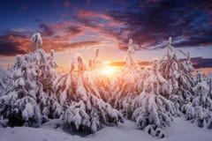 Красивый ландшафт природы зимы Деревья покрыли снег стоковые изображения rf