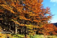 Красивый ландшафт природы с Mt. Fitz Роем как замечено в национальном парке Лос Glaciares, Патагонии, Аргентине Стоковые Фотографии RF