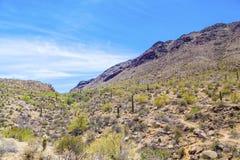 Красивый ландшафт пустыни горы с кактусами стоковые фотографии rf