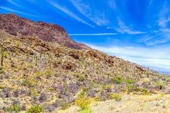 Красивый ландшафт пустыни горы с кактусами стоковые изображения rf