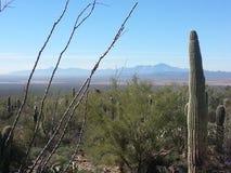 Красивый ландшафт пустыни и горы Аризоны Стоковое Изображение