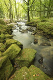 Красивый ландшафт реки пропуская до сочный лес Golitha Стоковая Фотография