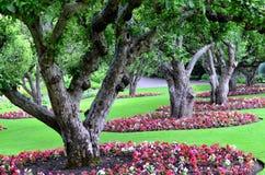 Красивый ландшафт сада Стоковое Фото