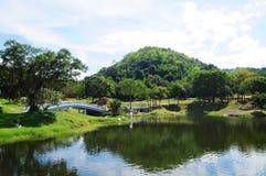 Красивый ландшафт - сад с прудом стоковое фото rf