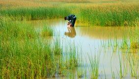 Красивый ландшафт, сельская местность Вьетнама Стоковая Фотография RF