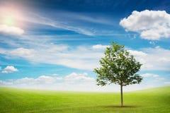 Красивый ландшафт сиротливого дерева Стоковые Фото