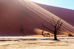 Красивый ландшафт спрятанного Vlei в пустыне Namib Стоковые Фото