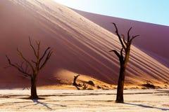 Красивый ландшафт спрятанного Vlei в пустыне Namib Стоковое Изображение