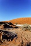 Красивый ландшафт спрятанного Vlei в пустыне Namib Стоковое фото RF