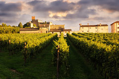 Красивый ландшафт с виноградниками Стоковые Изображения