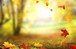 Красивый ландшафт с желтыми деревьями, зеленой травой и солнцем Стоковое Изображение RF