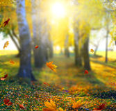 Красивый ландшафт с желтыми деревьями, зеленой травой и солнцем Стоковое Изображение