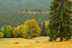 Красивый ландшафт с дикими лошадьми, Carpatians горы, Ukrai стоковая фотография rf