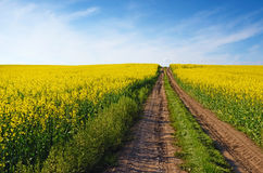 Красивый ландшафт с полем дороги средним желтым рапса на s Стоковое фото RF