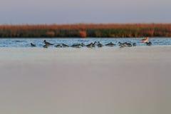 Красивый ландшафт с птицами на озере Стоковое Фото