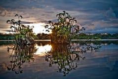 Красивый ландшафт, тропический лес Амазонки, Yasuni Стоковое фото RF