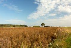 Красивый ландшафт, луга и поля осени Стоковые Фото