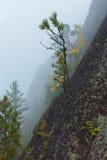 Красивый ландшафт утра в горах запас Природа Сибиря Стоковое фото RF