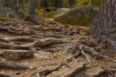 Красивый ландшафт утра в горах запас Природа Сибиря Стоковое Изображение RF
