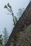 Красивый ландшафт утра в горах запас Природа Сибиря Стоковое Фото