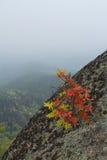 Красивый ландшафт утра в горах запас Природа Сибиря Стоковая Фотография