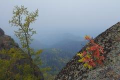 Красивый ландшафт утра в горах запас Природа Сибиря Стоковые Изображения