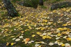 Красивый ландшафт утра в горах запас Природа Сибиря Стоковые Фотографии RF