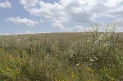 Красивый ландшафт цветков Стоковое Изображение